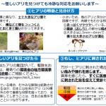 【注意喚起】ヒアリに関する諸情報について(環境省HP&日本蟻類研究会HPより)